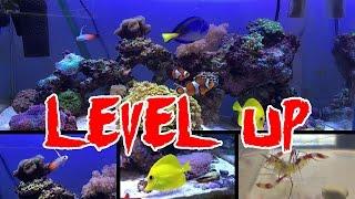 60センチ海水水槽 さらにレベルアップ! 新しい生体とサンゴ、波発生装...