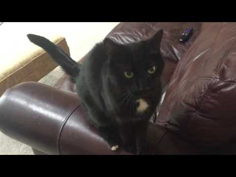 Domestic Cats the Documentary