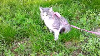Домашняя кошка гуляет на набережной