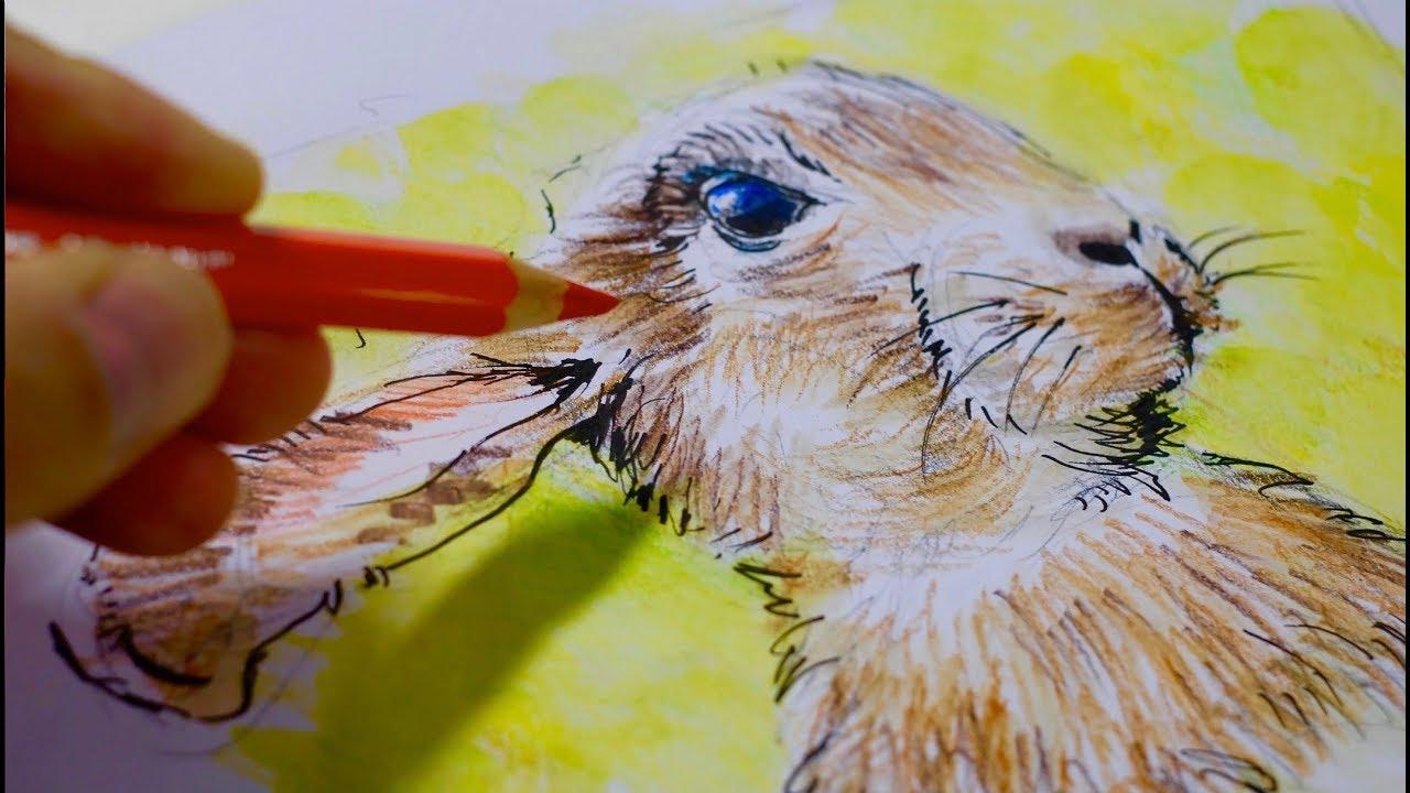Kaninchen und hase ganz einfach zeichnen lernen 22 youtube - Hase zeichnen ...