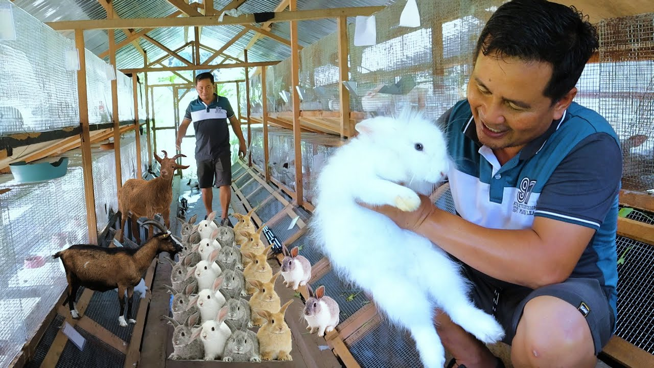 HARVESTING DOZENS OF RABBITS │How to become successful in rabbit farming ( Free range farming)