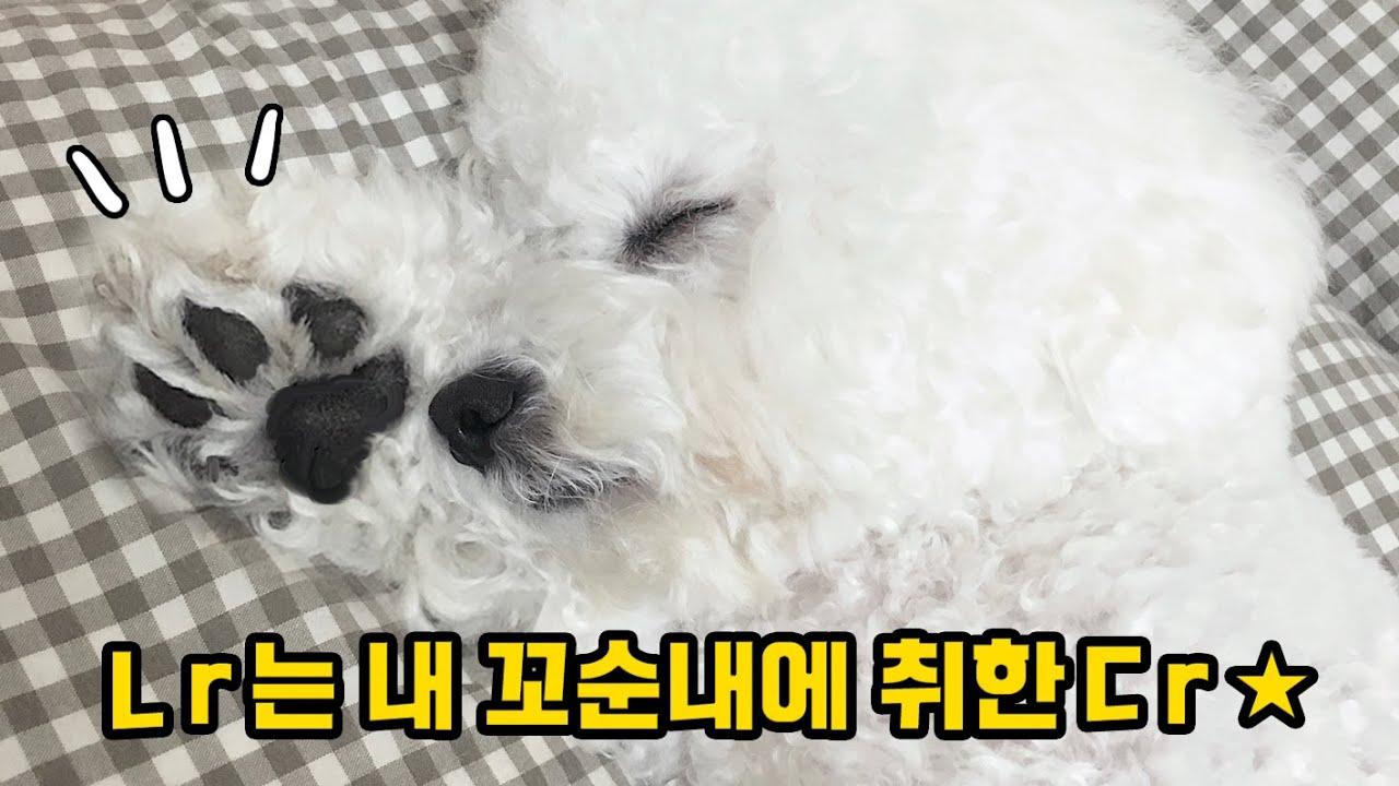 강아지도 잠꼬대하는거 아시나요...? 흠냐흠냐★