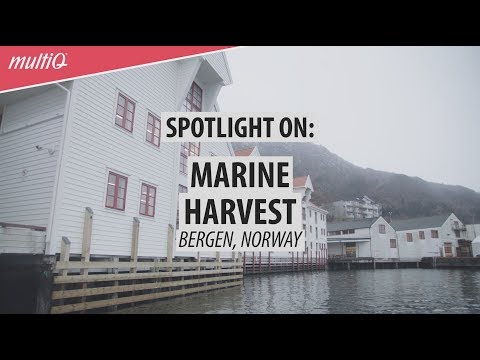 Spotlight on Marine Harvest - digital internal communication