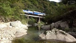 JR木次線 トロッコ列車 奥出雲おろち号  (18-Oct-2020) キャベツ1玉150円