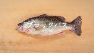 ブラックバスのさばき方 - How to filet black bass -|日本さばけるプロジェクト