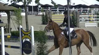 Flyer S (v.Cicero Z x Emilion) 1.35m 7yrs Final @ CSI De Wolden