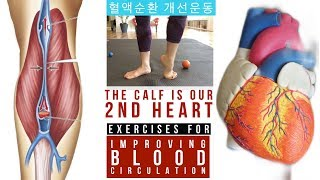 BEST EXERCISES TO IMPROVE BLOOD FLOW & CIRCULATION IN LEGS | 혈액순환 돕는 운동방법 | 血液の循環運動