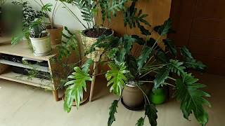 Our In-house Plants 우리의 거실 식물 …