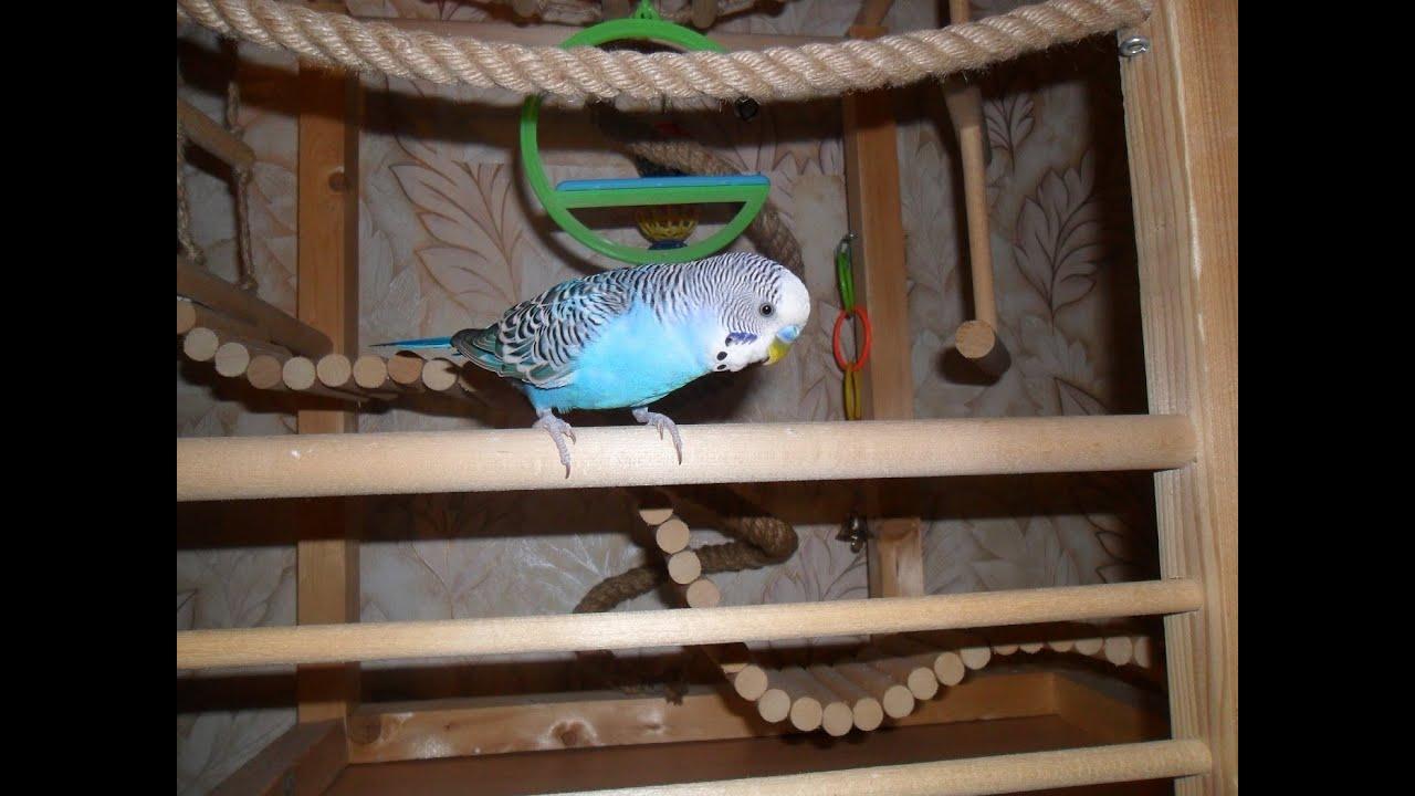 Игровой стенд для попугая.