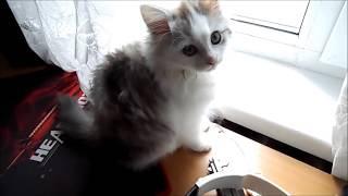 Что может делать котёнок один дома? Смешное видео!
