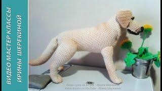 Лабрадор - собака Путина! ч.1. Labrador is Putin's dog! р.1.  Amigurumi. Crochet.  Амигуруми.