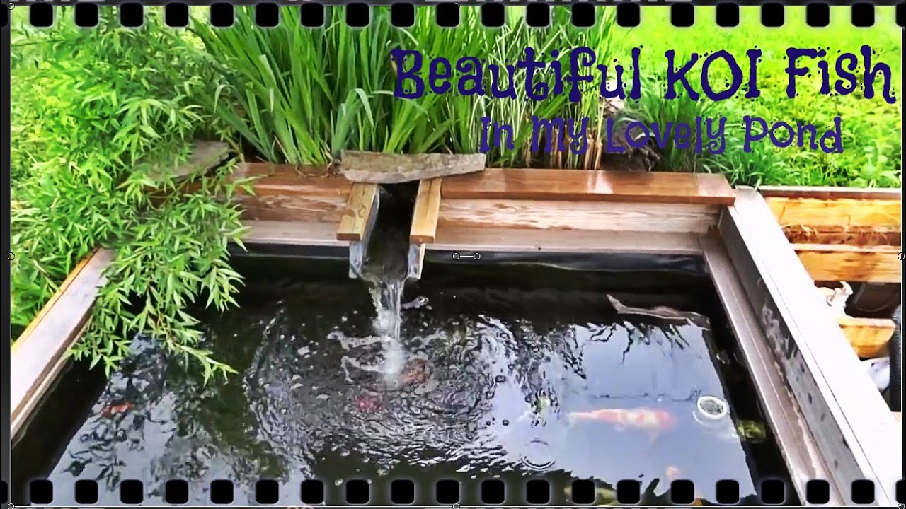 Beautiful Koi Fish Pond With Filter System Part 2 Youtube