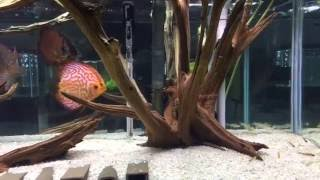 Fish Room Tour: Beautiful Display Tanks