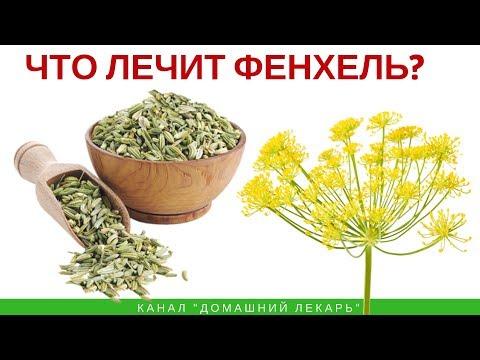 Как выглядят семена фенхеля