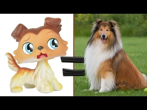 LPS in Real Life! Littlest Pet Shop Popular Cats and Dogs in Real Life | MLP Fever