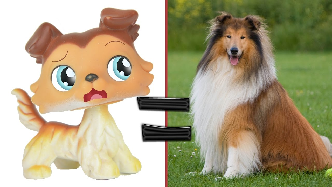 Littlest Pet Shop Popular Cats And Dogs In Real Life Mlp Fever