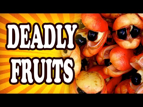 Top 10 Weird Fruits That Could Kill You — TopTenzNet