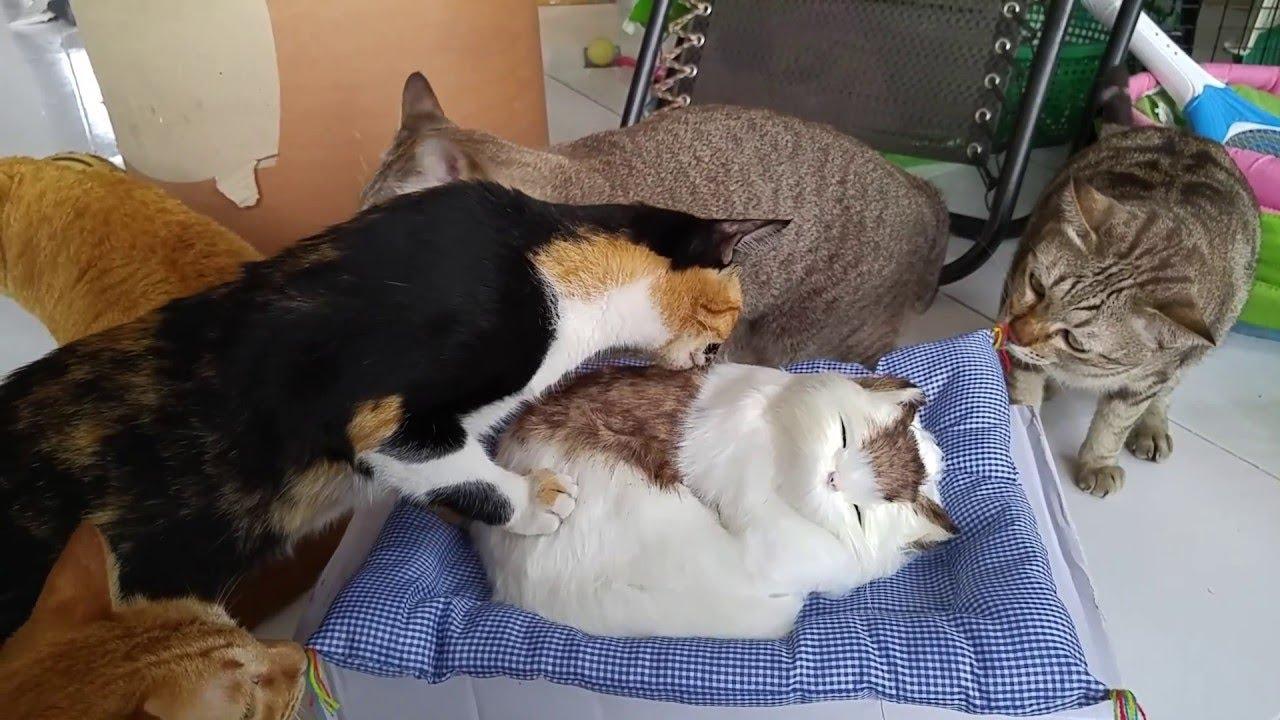 Fake Feline Friend    ViralHog