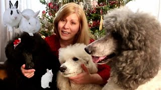 My Furry Pets Opening Their Christmas Gifts | Standard Poodles | Rabbits | Hamster