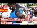 6 Point Penting Memilih Merpati Bagus Di Pasar Mastering(.mp3 .mp4) Mp3 - Mp4 Download