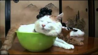 AMAZING Litter Kwitter Cat Toilet Training