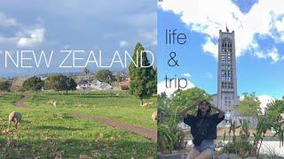 랜선 여행   뉴질랜드의 일상과 여행 일기   크리스마…