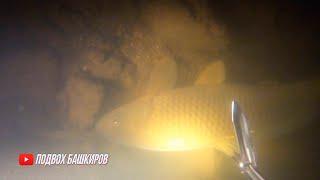 Топ 5 промахов сезона 2019 2020 на подводной охоте в сазанов Огромные сазаны Сазаны в корягах