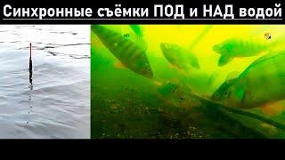 Синхронная Съёмка под и над водой Рыбалка на озере Карасун Краснодар Поплавочная удочка Fishing