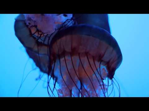 Jellyfish - (song is Come Back When You Can by Barcelona)