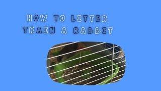 How To Litter Train A Rabbit🐰