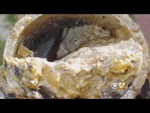 """130-Ton """"Fatberg"""" Causing Stink In London Sewers"""