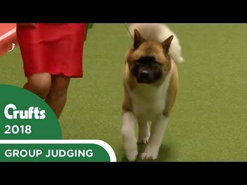 Utility Group Judging   Crufts 2018