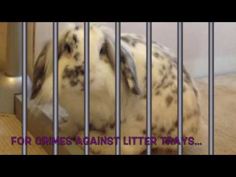 """Bonnie and Clyde """"Witness Protection Programme"""" @ Fairly Beloved Rabbit Care"""