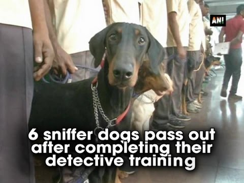 6 sniffer dogs pass out after completing their detective training - ANI News