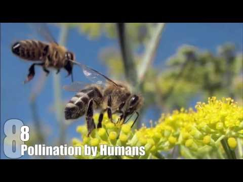 Top 10 Things That Would Happen if BEES DIED OUT