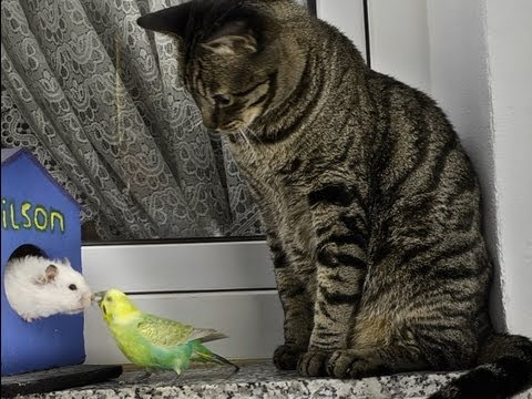 Cats, Birds & Hamster - Peace in the animal kingdom