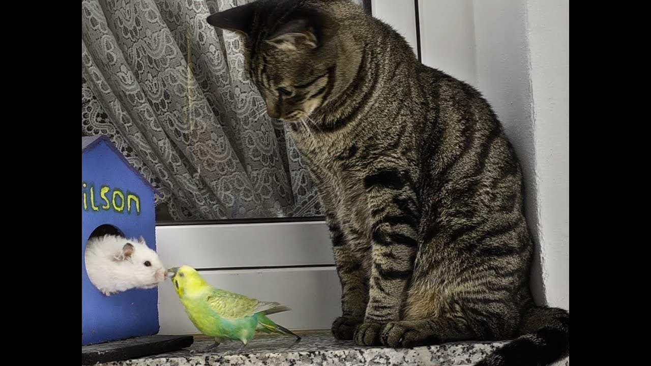 Cats Birds Amp Hamster Peace In The Animal Kingdom YouTube