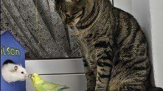 違ってもお互い認め合う世界、猫もハムもインコも仲良し