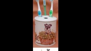Miniature Schnauzer Emma Brushing Her Teeth