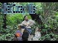 Mikat Burung Cucak Wilis  Mp3 - Mp4 Download