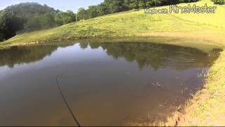 West Virginia Farm Pond Largemouth Bass Fishing #1