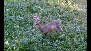 Indiana deer hunting 2012