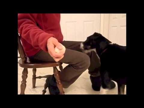 best cat litter tips