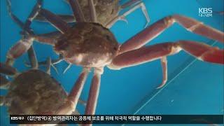 """[여기는 포항] 동해안 대게잡이 시작…""""불법 포획 엄격…"""
