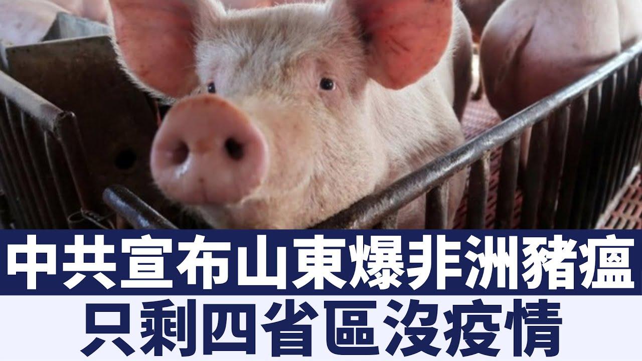 中共宣布山東爆非洲豬瘟 只剩四省區沒疫情 早安新唐人【2019年2月21日】 新唐人亞太電視 - YouTube