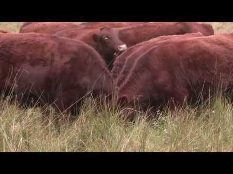 Wildlife Conservation Training:  Land management skills, volunteers, career advice