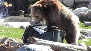 Grizzly Bears Make Great Product Testers