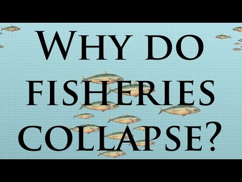 Why Do Some Fish Populations Collapse?