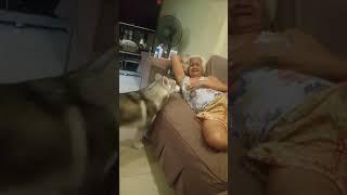 Husky Wants To Breast Feed