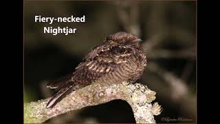 12 nocturnal bird calls from southern Africa